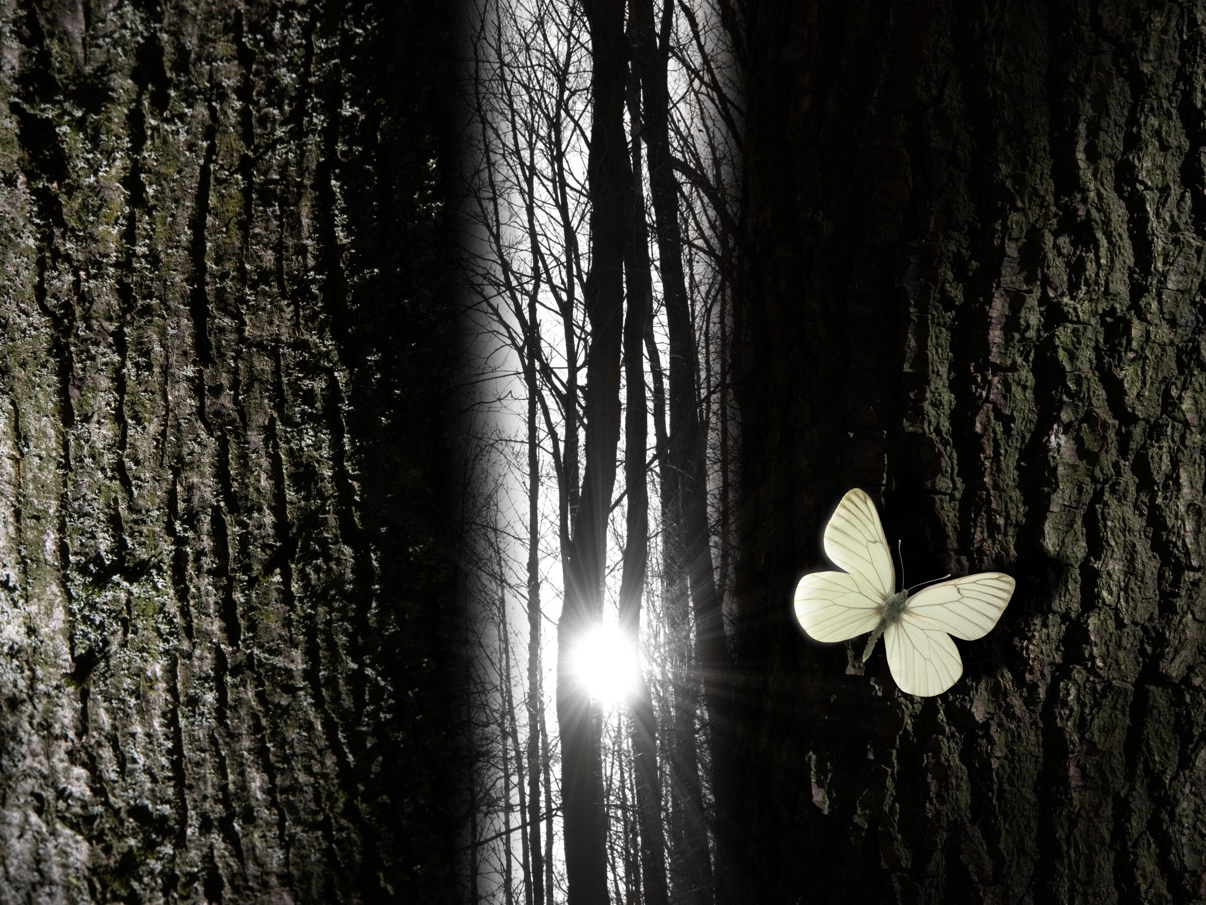 Spiritual butterfly near a tree gap light